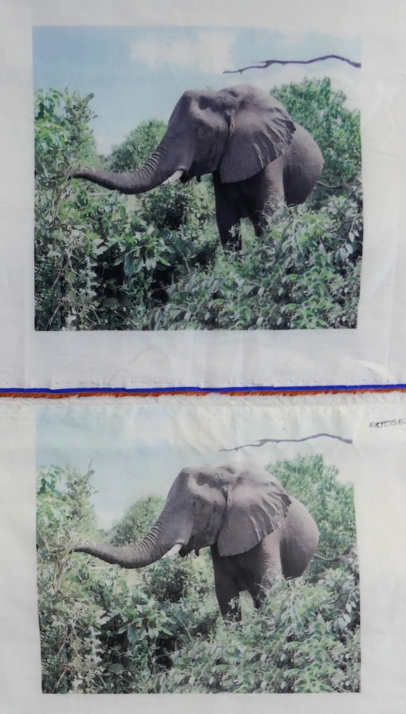 elephant photo sun exposure test