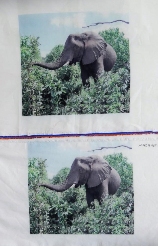 Elephant photo wash test.